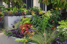 Pierre Laclede Center planters- Aug '14 | Flickr - Photo Sharing!