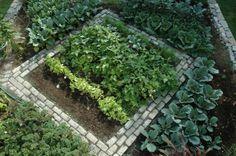 lettuce succession garden