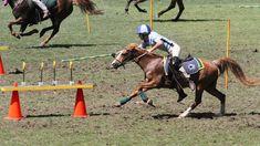 38 Best Gymkhana Horse Games images | Horse games, Horse