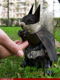 Bat Squirrel pictures