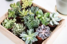 Various succulents for the Urban Jungle - Before After DIY Before And After Diy, Halloween Quilts, Christmas Mood, Nordic Design, Succulents, Home And Garden, Urban, Modern, Plants
