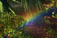 Rainbow between flowers and grass