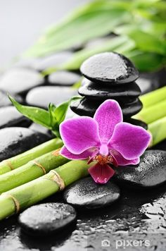 Feng Shui, Ikebana, Mini Jardin Zen, Deco Zen, Basalt Stone, Zen Meditation, Zen Art, Botanical Flowers, Spa Day