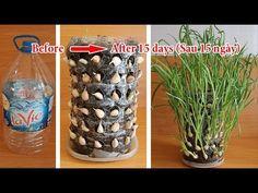 Thinking about growing garlic is difficult, who thinks it is too easy Indoor Water Garden, Indoor Vegetable Gardening, Container Gardening, Regrow Vegetables, Growing Vegetables, Growing Plants, Greenhouse Plants, Garden Planters, Diy Crafts Life Hacks