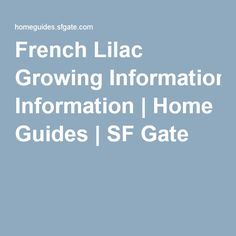 French Lilac Growing Information | Home Guides | SF Gate