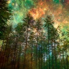 Starry Night Sky, Night Skies, Ciel Nocturne, Tree Forest, Magic Forest, Winter Trees, Harvest Moon, Nature Photos, Woodland