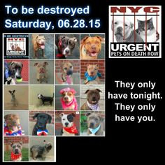 "TO BE DESTROYED: 17 Dogs to be killed by NYC ACC - SAT  6/28/14 -This is a HIGH KILL ""CARE CENTER"" . Too many great dogs put down daily! Babies, puppies, mamas, healthy, friendly dogs. POOR LIVING CONDITIONS CARE. Please help any way you can. See link if interested - read carefully: www.urgentpetsond.."