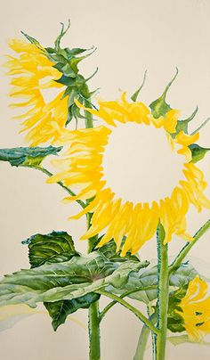 Watercolor demonstration of sunflowers by artist Lisa Hill Step 2