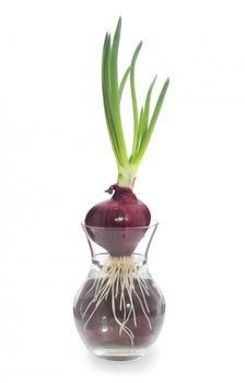 Unraveling the beauty of house plants that grow in water