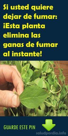 Si usted quiere dejar de fumar: ¡Esta planta elimina las ganas de fumar al instante! #fumar #planta #salud