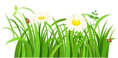 Grass with Daisies and Lady bugs PNG Clipart