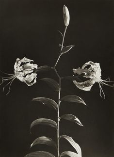 View Sans titre fleurs by Dora Maar on artnet. Browse upcoming and past auction lots by Dora Maar. French Photographers, Female Photographers, Pablo Picasso, Dora Maar Picasso, Street Photography, Art Photography, Berenice Abbott, Day Lilies, Portraits