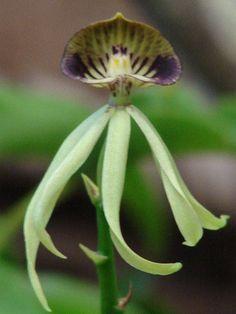 orquídeas en Costa Rica