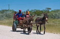 Image result for donkeys and cartt in south africa Landscape Photos, Landscape Paintings, Oil Paintings, Landscapes, African History, African Art, Shrubs For Landscaping, Good Old Times, Pet Portraits