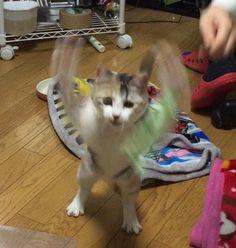 Master of the kung fu (via onsennyanko)