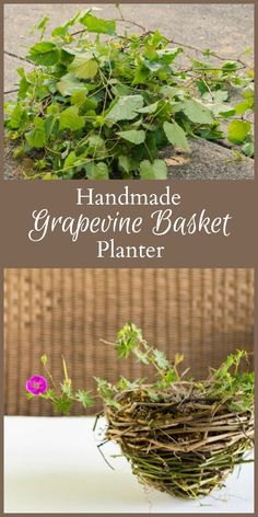 Learn how to put all those crazy wild grapevines to good use by creating a handmade rustic grapevine basket that you can use as a planter.