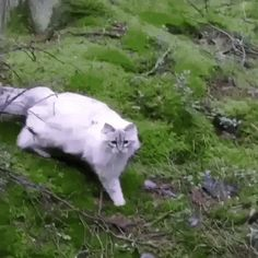 Post with 4452 votes and 663329 views. Tagged with cat, caturday, youthinkastreamwouldstopme; You mentioned something about physics? Kitten Gif, Cat Gif, Dumb Meme, Funny Memes, Cute Cats, Funny Cats, Jumping Cat, Funny Photoshop, Funny Cat Videos