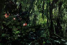 Tapuaba, 2012, C-Print on Diasec, 125 x 188 cm