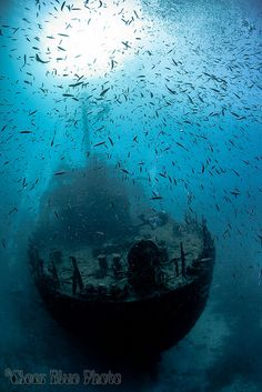 When you delve underwater, you never know what you'll find! How about this wreck in the Maldives?