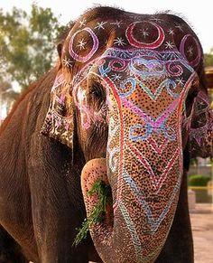 painted wedding elephant