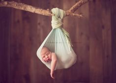 newborn photographer, baby in a sling hanging from a branch