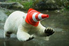 Nela e Nobby, i due gemelli di orso polare giocano coi birilli. Foto - gallery - Virgilio Notizie