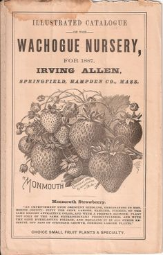 The Wachogue Nursery-1887-USA-'Monmouth Strawberry'