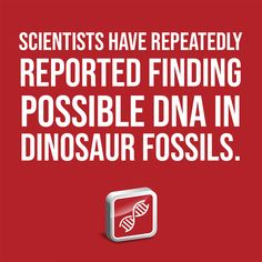 Scientists have repeatedly reported finding possible DNA in dinosaur fossils. Seafloor Spreading, Institute For Creation Research, Dna Research, Mammoth Tooth, Plate Tectonics, Dinosaur Fossils, Denial, Scientists, Discovery