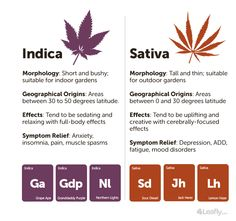 Indica and sativa strains both have medical utility, but because of their perceived differences, they are often selected for different symptom management