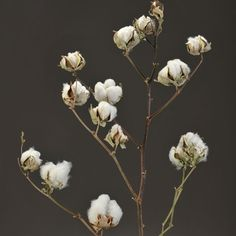 Natural Cotton Stems | Rustic Wedding | Afloral.com $11.98 for a two pack.