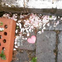 #petali #cuore #rosa  #buongiorno a tutti e #buonaDomenica