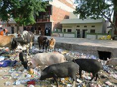 Jaipur, India...
