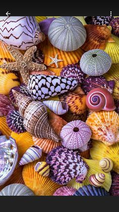 Shells Photograph - Ocean treasures by Garry Gay Stone Wallpaper, Nature Wallpaper, Deco Marine, Seashell Crafts, Shell Art, Colorful Wallpaper, Sea Creatures, Belle Photo, Cute Wallpapers