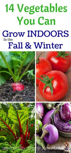 14 Vegetables You Can Grow INDOORS in the Fall & Winter. Gardening the house! garden vegetable winter grow lights 14 Vegetables You Can Grow Indoors in the Fall & Winter Fall Vegetables, Container Gardening Vegetables, Organic Vegetables, Vegetables To Grow Indoors, Growing Vegetables Indoors, Planting Vegetables, Veggies, Indoor Vegetable Gardening, Home Vegetable Garden