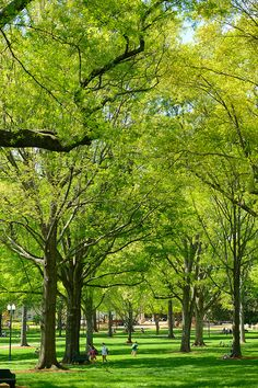 Does it get any better than the Grove?  Photo by UM Photographer Robert Jordan