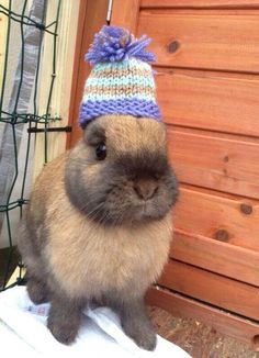 Bunny wearing a hat :) (Disapproving, of course)