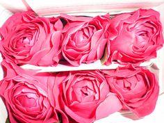 David Austin Garden Rose Darcy David Austin, Garden Roses, Cut Flowers, Beautiful Flowers, Burlap, Plants, Pink, Wedding, Valentines Day Weddings