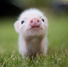 Awww! This pig is just adorable!! me in big form can give you a smile but im probly thinking how much i cant stand being around you