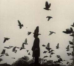 the birds.
