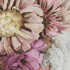 Dried Zinnias and a seashell. #BellaGraceMagazine #flower_beauties_  #still_life_gallery #floralphotography #zinnia #SeedsColor #homestaging #interiorstyling #interiordesign #decorativeart #decoration #walldecor #interiorart #homestyling #homedecoration #pastel #smpliving #interdesign #interiorinspiration