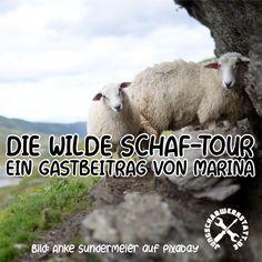 Die wilde  SCHAF-TOUR - Ein Gastbeitrag von Marina