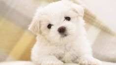 HD Dogs Wallpapers and Photos  HD Animals Wallpapers 900×506 Wallpaper Dog (42 Wallpapers) | Adorable Wallpapers
