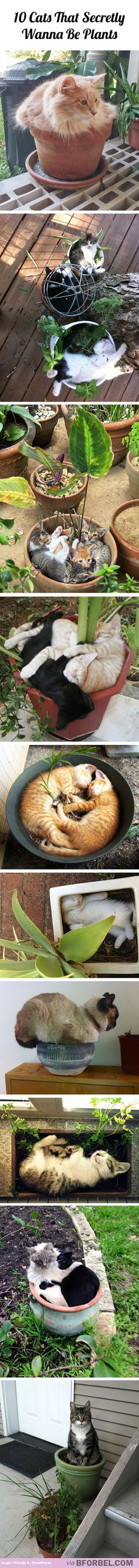 10 cats that secretly wanna be plants