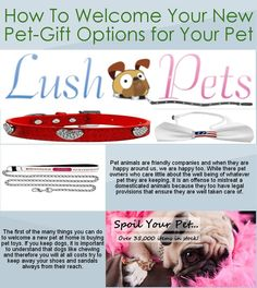 A dog or a cat likes to seek attention and this they do by always trying to be where people are. In any case, if you want to help them achieve their attention seeking efforts, pet accessories as well as pet care centres have the best advice you will ever sought.