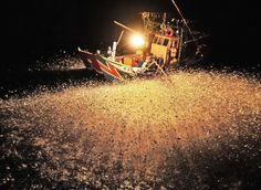 light fishing