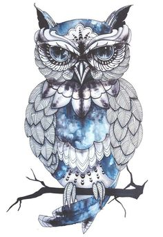 Owl drawing & blue color art