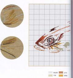 Gallery.ru / Фото #2 - Poissons Coquillages et Crustaces - Orlanda