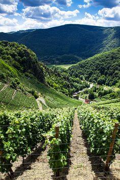 Red Wine Route (Rotweinwanderweg), Altenahr, Rhineland-Palatinate, Germany