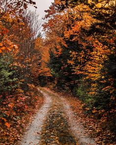 Image uploaded by crystalrainbow. Find images and videos about nature, autumn and fall on We Heart It - the app to get lost in what you love. Autumn Cozy, Autumn Forest, Fall Winter, Autumn Aesthetic, Fall Wallpaper, All Nature, Autumn Photography, Photography Flowers, Fall Pictures