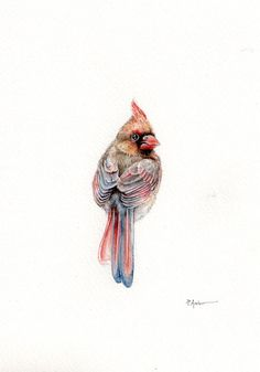 Original 7x9 Watercolour Red cardinal female ......NOT A PRINT ..Original Painting Red Collectible by Patrizia Ambrosini from HappyAppleBumblebee